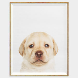 Baby Labrador Puppy Wall Art for Home and Nursery by The Ark