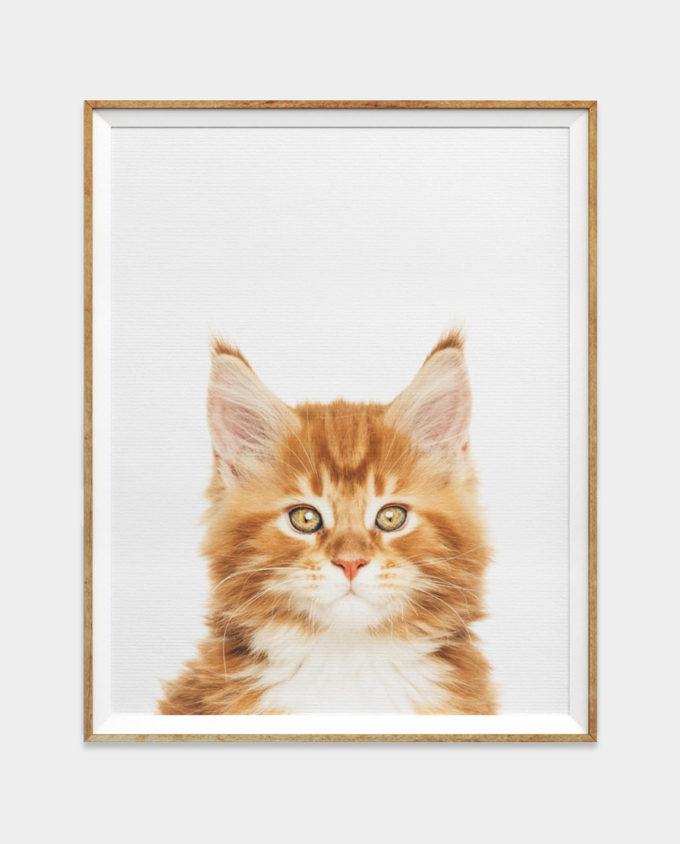 Ginger Kitten Print