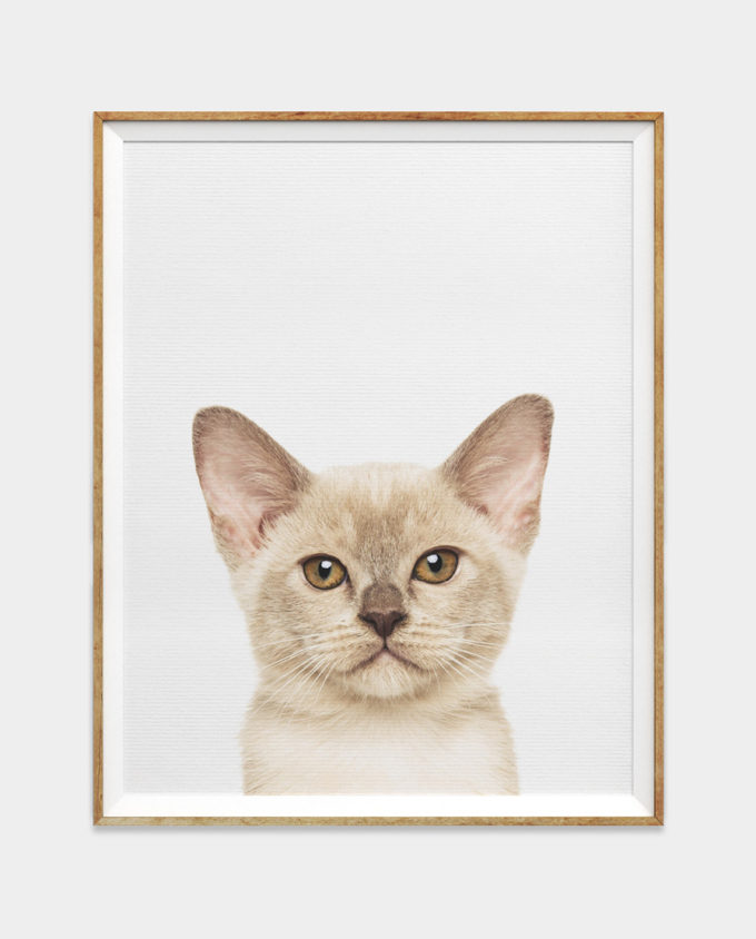 Grey Siamese Kitten Print