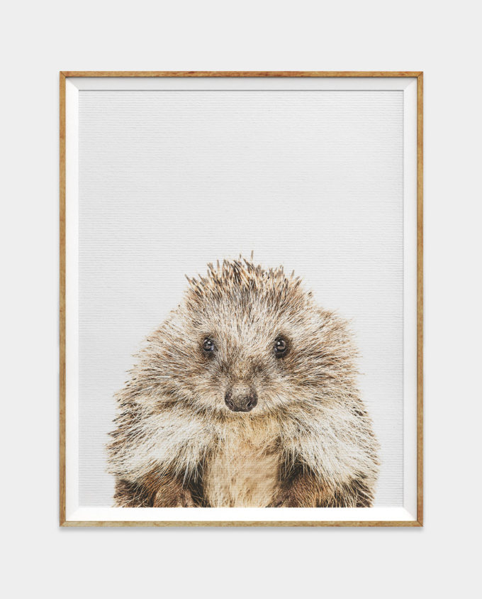 Hedgehog Digital Download