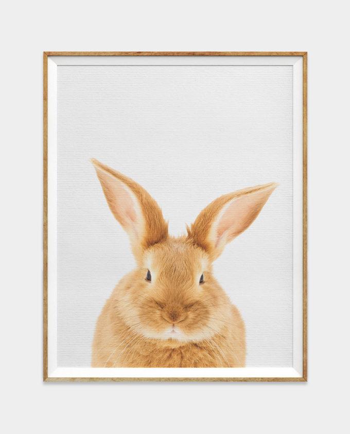 Bunny Rabbit Print