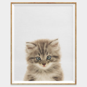 Cute Baby Kitten Digital Download Wall Art for Home and Nursery by The Ark