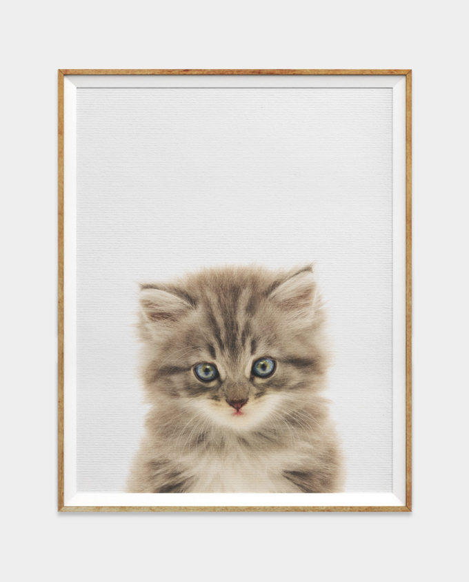 Grey KittenDigital Download