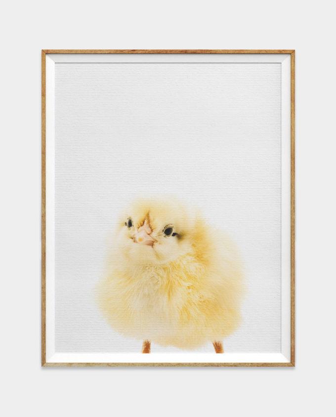 Baby Chick Print