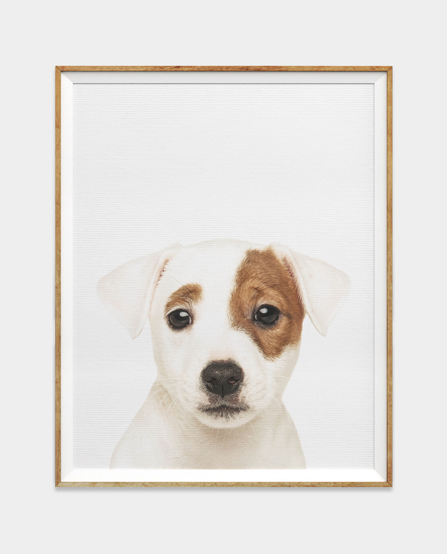 Baby Baby Puppy Wall Art for Home and Nursery by The Ark